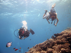 Reef Check in Action 096.JPG