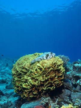 Masbat Bay Conservation EG-202.JPG
