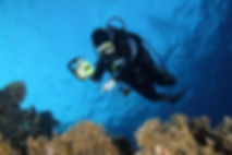 Reef Check in Action 108.JPG