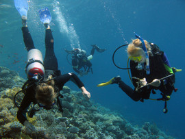 Reef Check in Action 058.JPG