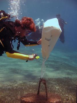 Masbat Bay Conservation EG-074.jpg