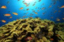 Red Sea Coral Reef  - Dahab, Egypt -Ras