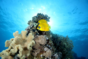 Red Sea Coral Reef  - Egypt - Ras Um Sid