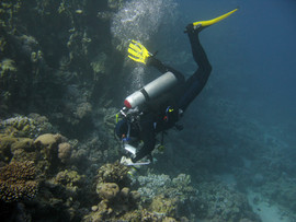 Reef Check in Action 061.JPG