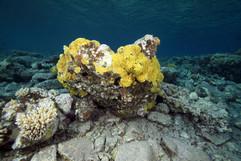 Masbat Bay Conservation EG-110.JPG