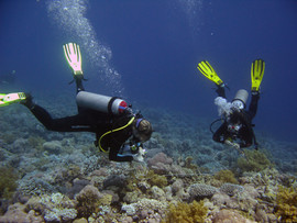 Reef Check in Action 056.JPG