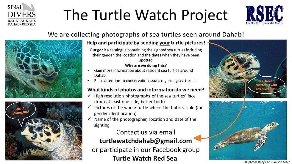 Turtle Watch Poster.jpg