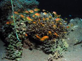 Masbat Bay Conservation EG-123.JPG