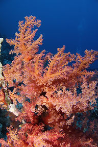 Woodhouse Reef EG-09.JPG