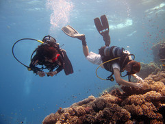 Reef Check in Action 097.JPG