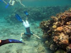 Korallenriff2010_03.JPG