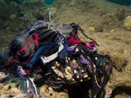 Masbat Bay Conservation EG-174.jpg