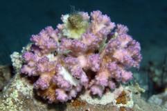 Masbat Bay Conservation EG-020.jpg