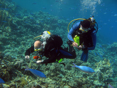 Reef Check in Action 067.jpg