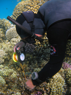 Reef Check in Action 065.jpg