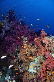 Thomas Reef EG-13.JPG