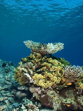 Masbat Bay Conservation EG-206.JPG