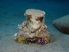 Masbat Bay Conservation EG-010.JPG