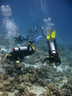 Reef Check in Action 049.JPG