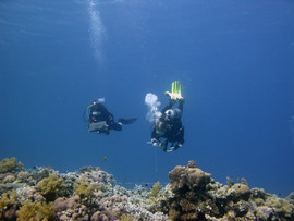 Reef Check in Action 052.JPG