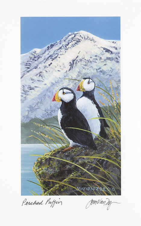 Perched Puffins
