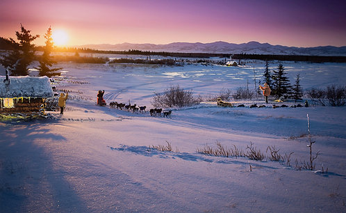 """""""The Arrival"""" 2021 Official Iditarod Collector Print"""