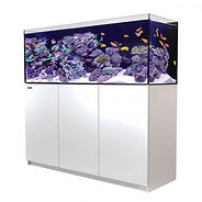 Fish Tank, Sydney Fish Tank, Aquarium, Aquarium Sydney, Red Sea Reefer, Aqua One Reef, Fluval, Innovative Marine