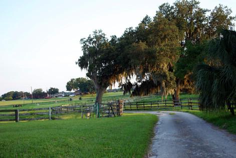 Florida, Stafford Hill