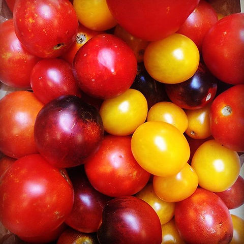 Freshly picked cherry tomatoes from Sali