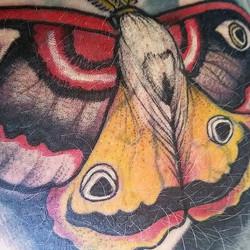 Detail shot of the moth I tattooed on my leg last night. ✨🌙_._._⚡www. QueenofCupsTattoo.com⚡_._._._