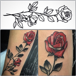 Simple Red Rose