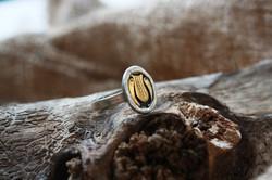 טבעת נבל דוד, כסף וזהב
