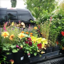 Truck full of flowers