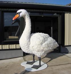 7 foot swan