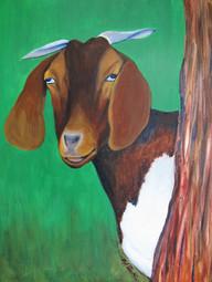 A Goat 24h x 18w Acrylic