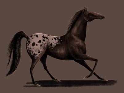 Appaloosahorse3.jpg