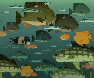 Fishes of Catalina, digital, 6.2-5.1in,