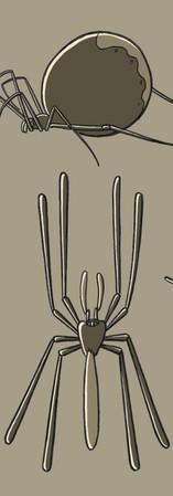 spiderdesigns2.jpg