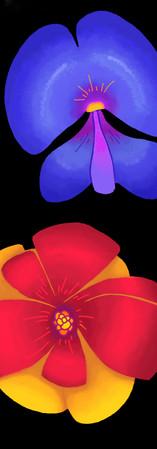 flower concepts2.jpg