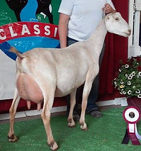 ADGA Dairy Goat Shows in Indiana, ADGA National Show, ADGA Open Dairy Goat Shows in Illinois