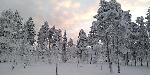 Winter scenery by the reindeer Reindeer