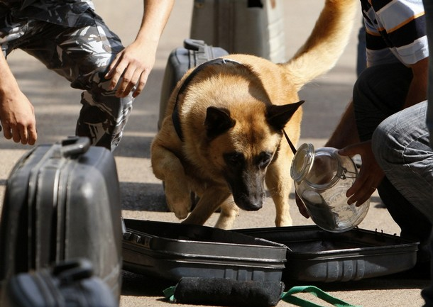 Internal Security Forces members, who trained dogs to detect bombs and drugs, fo