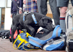 leash-lead-drug-dog.jpg