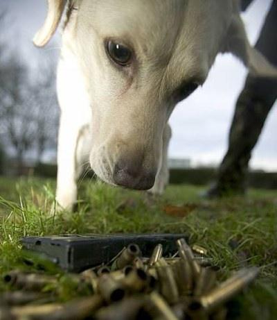 sniffing dog.jpg