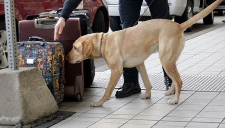 airport-bomb-dog.jpg
