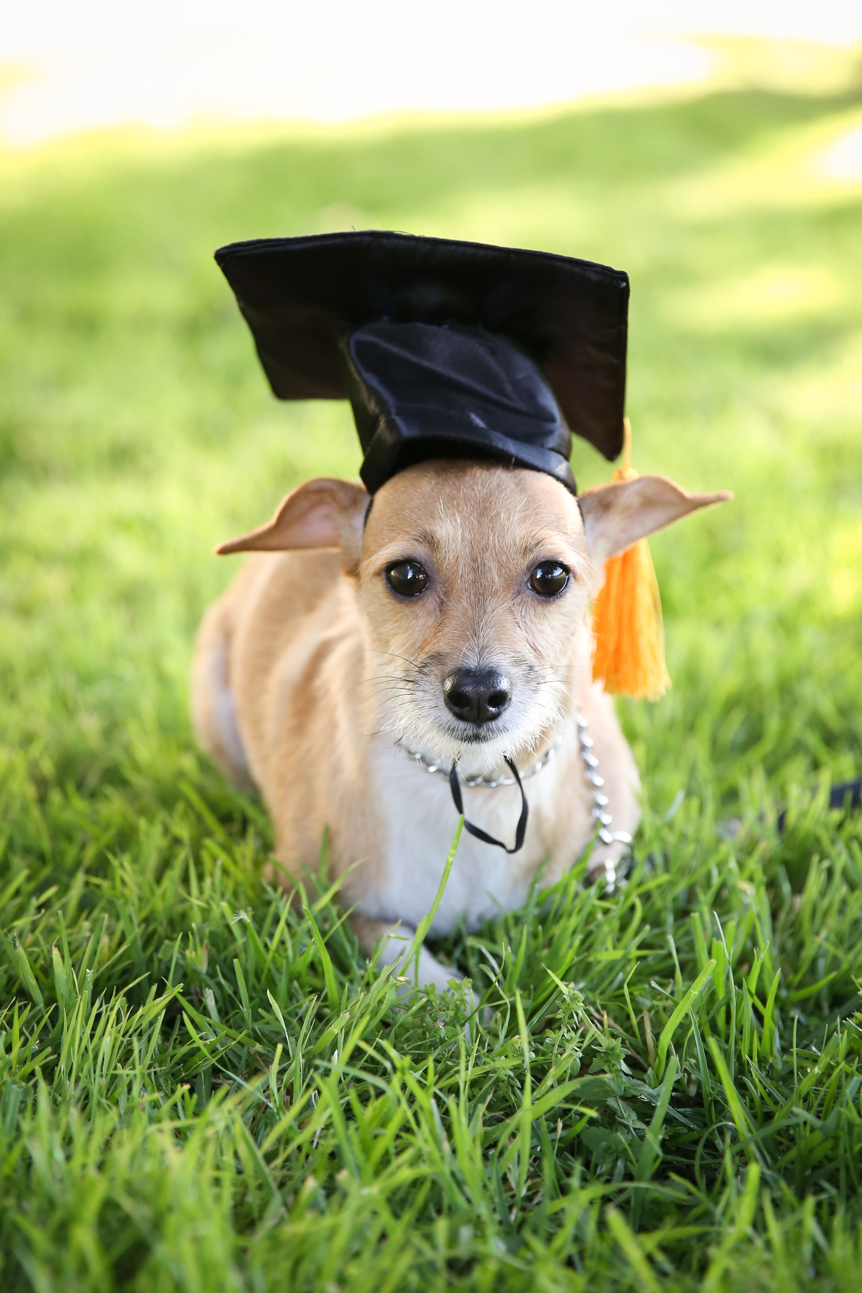 GraduationMay24-11