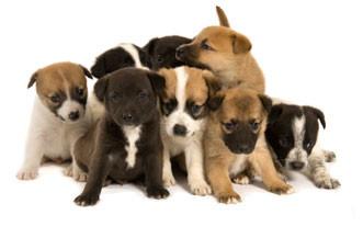 training-puppies.jpg