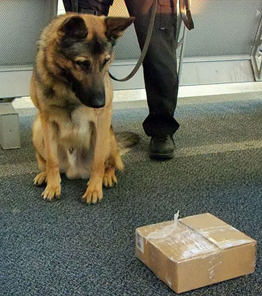 Bomb-Sniffing-Dogs.jpg