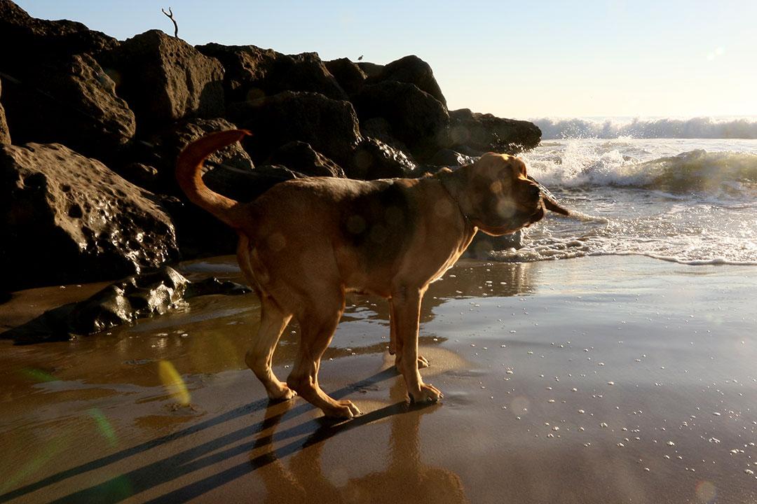 Roscoe at beach