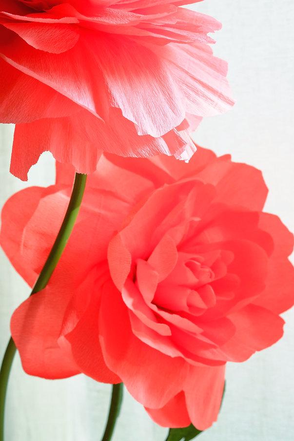 Бумажные цветы. Санкт-Петербург